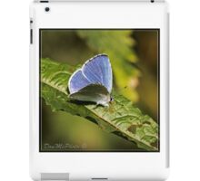 Holly Blue ( Ceelestrina argolus) (II) iPad Case/Skin