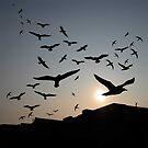 The Birds by John Dalkin