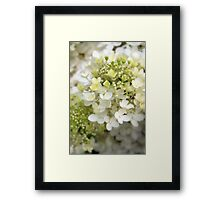 Purity of White... Framed Print
