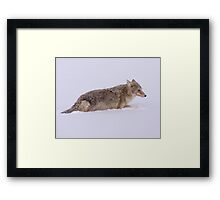 Coyote by the River Framed Print