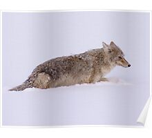 Coyote by the River Poster