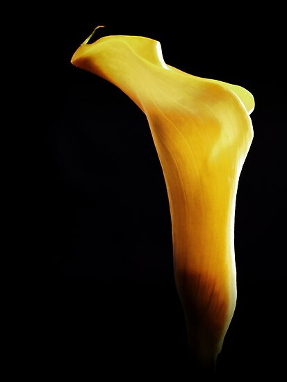 Smokey Yellow Calla Lily. by Aj Finan