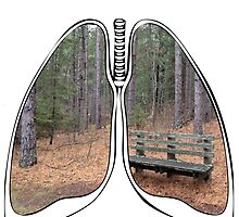 Lungs - National Park Bench by riskeybr