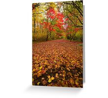 Autumn colour Alice holt forest Greeting Card