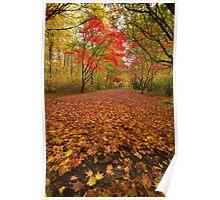 Autumn colour Alice holt forest Poster