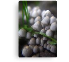 Lizard and Mushrooms Canvas Print