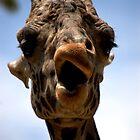 The Giraffe is smirking by loiteke