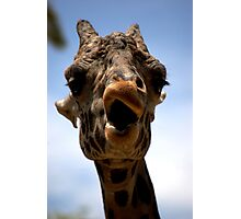 The Giraffe is smirking Photographic Print