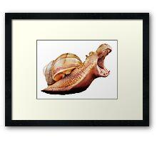 Rhino Snail Framed Print