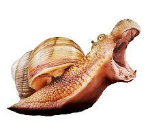 Rhino Snail Photographic Print