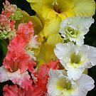 A bouquet of gladioli by Maria1606