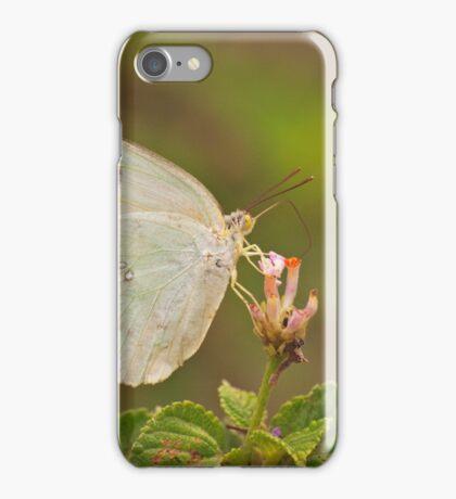 Feeding butterfly iPhone Case/Skin