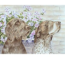 Dogs, Doug and Josh with Petunias Photographic Print
