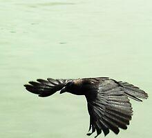 In Flight.... by Naveen Karunaratne