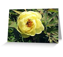 Yellow Tree Peony Greeting Card