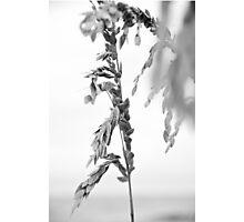Sea Grass Photographic Print