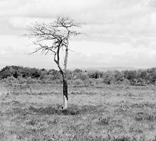 Lonely Tree Black & White by MarcoBell