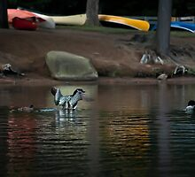 Loons and Colourful Canoes by Laura Cooper