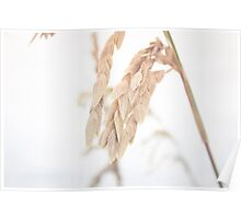 Sea Grass in the Wind Poster