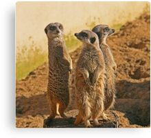 Compare the Meerkats Canvas Print