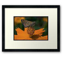 Untitled.00060 Framed Print
