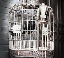 The Unknown Bird by Marc-Pierre Lubas