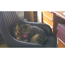 Office Kitty Photographic Print