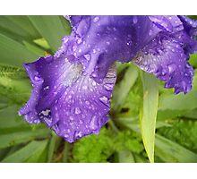 wet iris Photographic Print