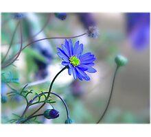 ~ Misty Blue Morn ~ Photographic Print