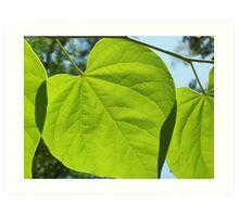 leaf overlap Art Print