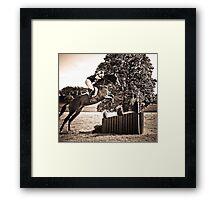 Show Jumping Framed Print