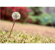 Fine by nature Photographic Print