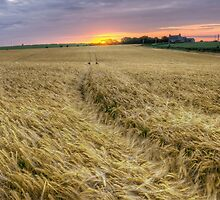 The Wheat Field at Sunset by MarcoBell