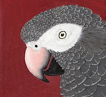 Timneh African Grey Parrot by Joann Barrack