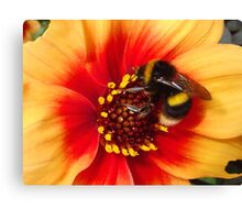Exhausted beauty Canvas Print