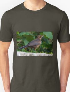 Young Blackbird........Dorset UK T-Shirt