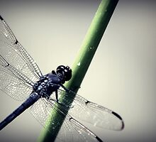 Blue Dragonfly by James Rollins