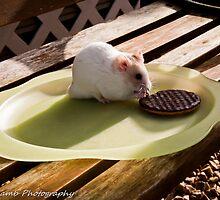 hamster tea break by Vincent Lamb