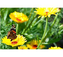 Butterfly in Yellow Photographic Print