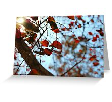 Fine Nature Greeting Card