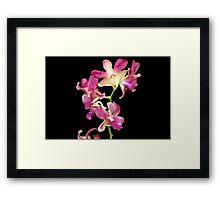 Quezon Memorial Circle orchids 37 Framed Print