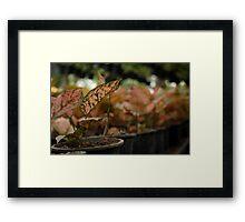 Quezon Memorial Circle reddish plants 39 Framed Print