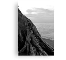 Driftwood in Black and White Canvas Print