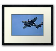 Bird of another Feather Framed Print