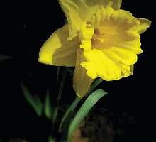 daffodil by BeatitudeSoul
