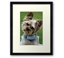 Grammies, what did you say? Framed Print