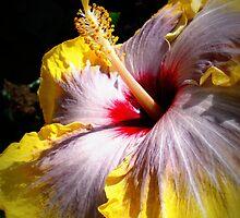 Beautiful hibiscus by BunBun