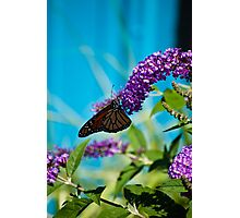 A Hungry Little Butterfly - Put In Bay Ohio Photographic Print