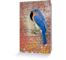 Male Bluebird Greeting Card