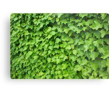 Wall of Ivy Metal Print